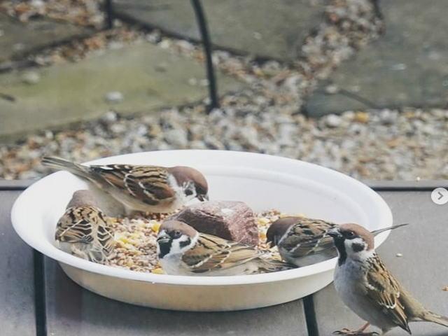 野鳥の食事風景