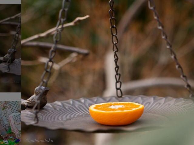 野鳥の好物果物
