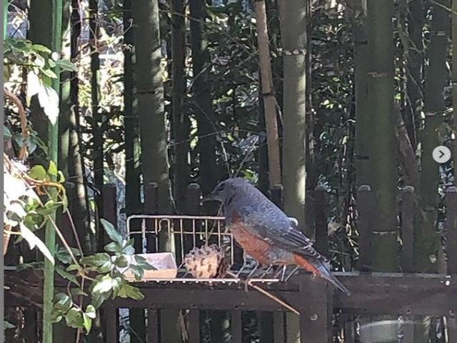 野鳥の餌台
