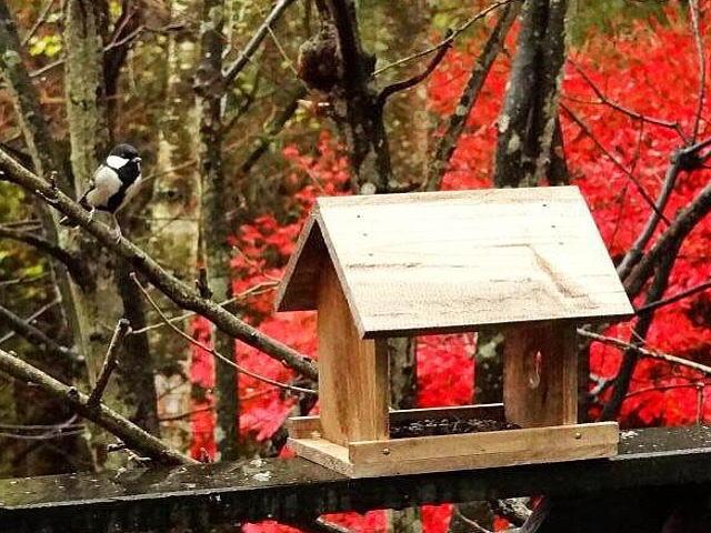 野鳥餌台バードウォッチング