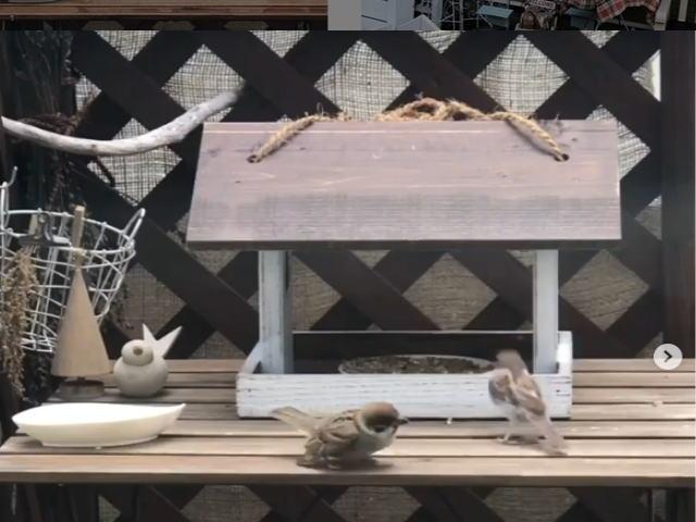 小鳥の餌付け小屋