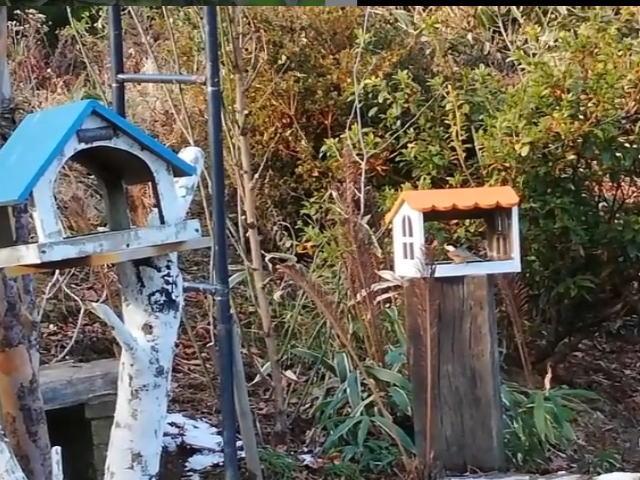 住宅街野鳥観察