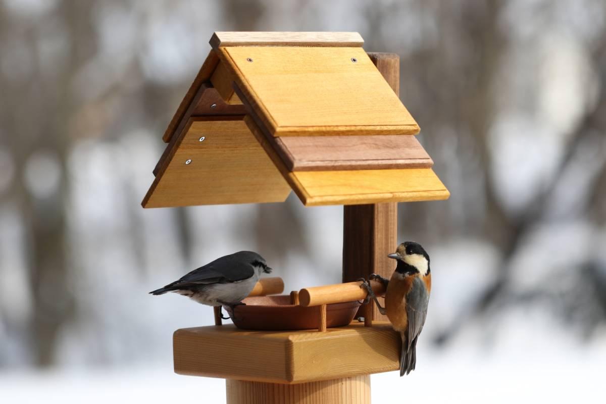 野鳥餌付け