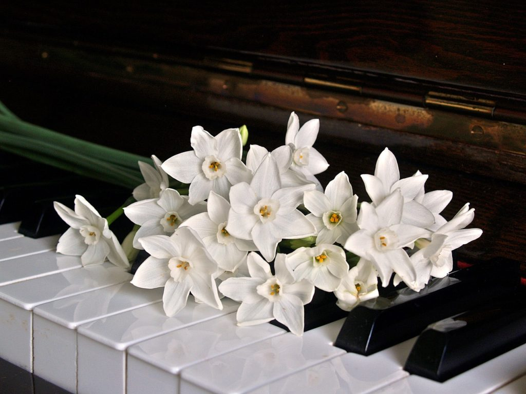 ピアノ初心者